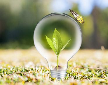 Uma borboleta pouzada sobre uma lâmpada reciclada